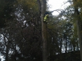 Large Tree Tree Surgeon