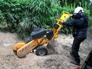 Stump grinding cornwall